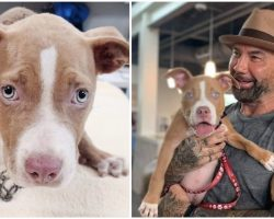 Actor Dave Bautista Adopts Abused, Chained-up Puppy, Offers $5,000 To Find Culprit