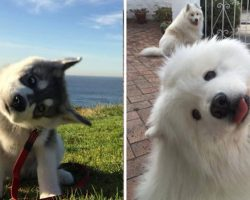 10+ Photos Of  Dogs Showing Off Their Adorable 'Head-Tilting' Skills Win The Internet's Heart