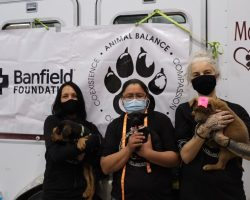 Animal Balance Crowdfunding for Free Veterinary Care in Navajo Nation