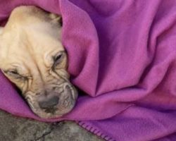 Found In The Alley Wrapped In A Blanket, She Couldn't Lift Her Head