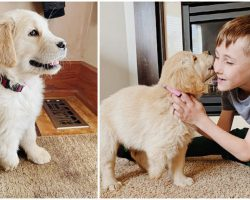 Boy with Amputated Leg Becomes Best Buddies with Puppy with Missing Paw
