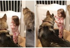 """Clever Dog & Cat Duo Teach Little Girl """"Go To Bed"""" So They Can Tuck Her In"""