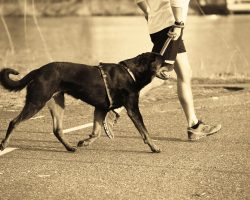 Dog Exercise: 20 Workouts To Try With Your Pup