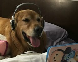 This Dog with Headphones Watching a Dog Video is Melting Internet's Heart