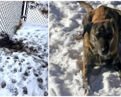 Dog Escapes Yard During Blizzard, Falls Into Lake & Walks 5 Miles Before Going Home