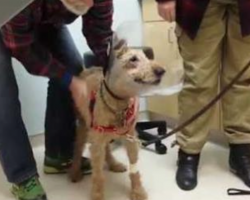 Dog Sees His Family Again After Getting Eye Surgery