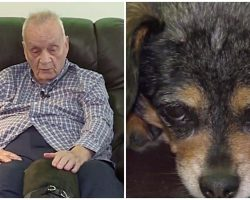 Dog Finds 92-Year-Old Blind Neighbor On The Ground, Immediately Alerts Her Owner