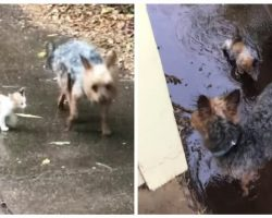 Dog Rescues Tiny Abandoned Kitten By Bringing It Home