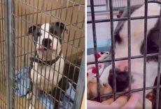 Dog's Shelter Pal Gets Adopted Leaving Him Alone, So Worker Makes Him A Promise
