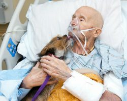 Dying Veteran in Hospice Had One Final Request: To See His Pup One Last Time