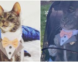 Cat Dresses Up In Fancy Suit To Serve As Ring Bearer At His Mom's Wedding