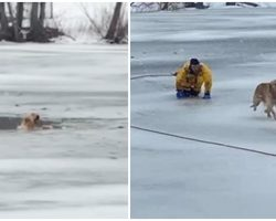 Heroic Firefighters Brave Freezing Water & Races To Save A Dog Who Fell Through Ice