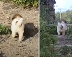 Stray Puppy Insists Rescuers Follow Him Into Abandoned Building