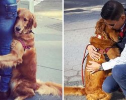Friendly Golden Retriever Hugs Every Single Person She Sees On Her Walks