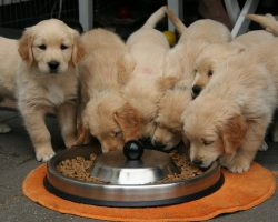 Kibble, Raw, or Table Scraps: What's the Best Dog Food to Feed Your Dog?