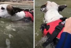 Hero Dog Sees A Boy Being Swept Away In The Water And Jumps In To Help