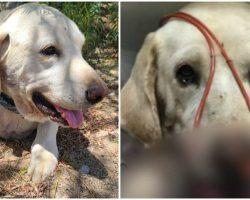 'Hero' Dog Saves His Teenage Owner From Rattlesnake Bite