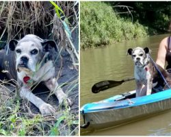 Kayakers Goes Out Of Their Way To Save A Lost Dog on the Riverbank and Give Her a Ride Back to Shore