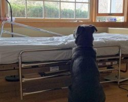 Heartbroken Dog Adopted After Photo Of Him Waiting By Late Owner's Bedside Broke Internet's Heart