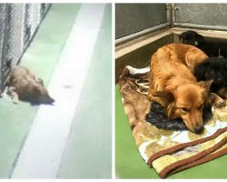 Momma Dog Sneaks Out of Kennel to Comfort Crying Puppies Waiting to be Adopted