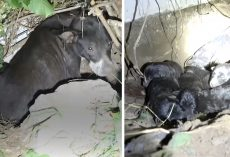 Someone Stole One Of Mama's Puppies, And She Tried To Convey That To Rescuers