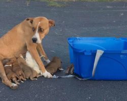 Animal Rescue Group Saves Momma Dog & Her 9 Puppies Dumped in Church Parking Lot