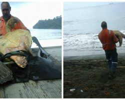 Man Saves Sea Turtles By Buying Them All From Local Food Market & Setting Them Free