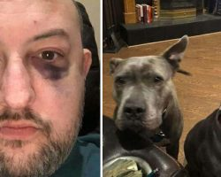 Man Adopted Two Abandoned Pit Bulls — They Repaid Him By Saving His Life