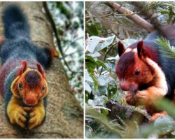 Malabar Giant Squirrels Are So Colorful People Can't Believe They're Real