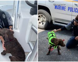 Marine Police Officers See Dog's Nose Sticking Out of Water, Rescues Puppy Swept Away from Beach