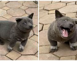 Puppy Goes Viral For Looking Like A Dog/Cat Cross