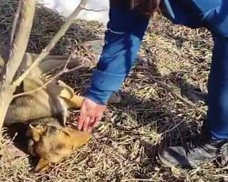 Woman Approaches Dog Who'd Been Unable To Move For 4 Days