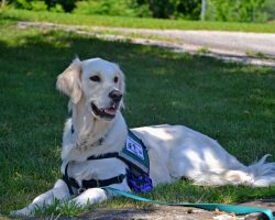 Veterans with PTSD Could Get the VA to Pay for Service Dogs Under New Law