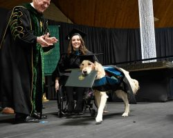 Service Dog Receives Honorary Degree for Helping Owner Get Through Grad School