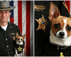 Retired Sheriff Passes Away, Then His Longtime K9 Partner Dies Just Hours Later