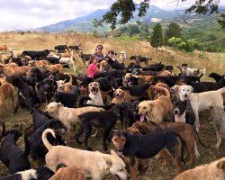 The Biggest Dog Shelter in History: Territorio De Zaguates