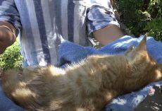 Injured Kitten Needed Help, But The Chosen Method Did More Harm Than Good