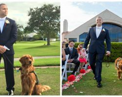 Wounded Veteran Gets Married With His Service Dog As His Best Man