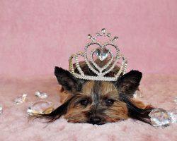 5 Most Popular Royal Dog Breeds