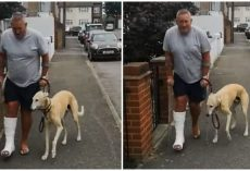 After A $ 400 Trip To The Vet, Man Learns His Dog Pretended To Walk With A Limp Like Hm Out Of Sympathy