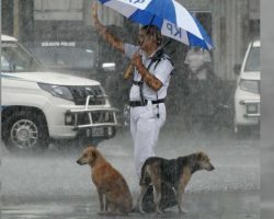 During Heavy Rainstorm, Cop Shares Umbrella With Stray Dogs