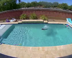 Dog Jumps For Joy When He Realizes No One's Looking & Has The Pool All To Himself