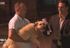 Dog Reunites With The Soldier Who Rescued & Adopted Her In Iraq On Live Television