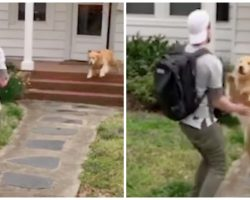 High Flying Golden Retriever Greets Owner By Leaping Into His Arms Every Day