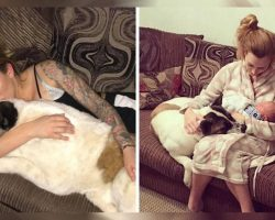 Pregnant Woman's Dog Wouldn't Stop Barking Her. Her Warning Ended Up Saving Her Life