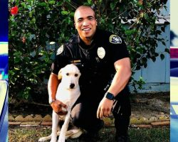 Police Officer Adopts a Puppy After Discovering Him in a Stolen Car He Found