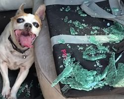 Police Smash Car Window to Save Dog Who Was Left in a Hot Car with 123-Degree Heat