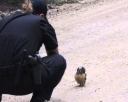 Police Officer And A Baby Owl Have The Cutest Conversation Ever