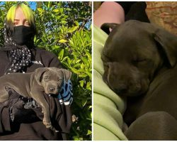 Singer & Songwriter Billie Eilish Fosters Two Pit Bulls Puppies During Quarantine — Decides to Adopt One of the Pups