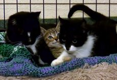 Shelter Looking for Home for Blind Cat, His 'Seeing Eye' Mom and their Kitten Friend
